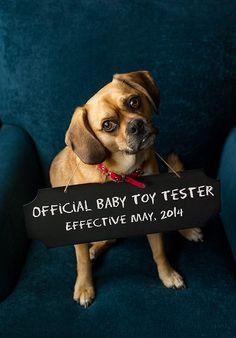 baby aankondiging met hond