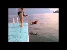 Corgi jumping from dock.  THIS is hilarious!!!  The corgi is trying...flying far!  I can't stop laughing!!!