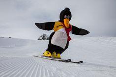 #BOBO der Pinguin  unser Maskottchen Snowboard, Animation, Club, Bomber Jacket, Sports, Ski, Hs Sports, Animation Movies, Sport