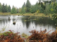 Lord Hill Loop. Puget Sound. Roundtrip 10.0 miles, Elevation Gain 200 ft, Highest Point 200 ft. (Year Round Walking Trails)