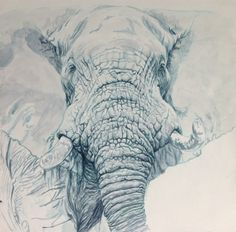 Elephant - oil on panel, Murray Ralfe