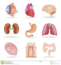 Ask human body organs pinterest worksheets english and corpo umano organi cerca con google ccuart Gallery