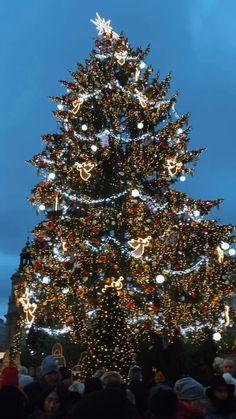 Prague Winter, Czech Republic, Christmas Tree, Holiday Decor, Teal Christmas Tree, Xmas Trees, Christmas Trees, Bohemia, Xmas Tree