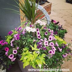 Lot's of pretty planters with tips to create your own.