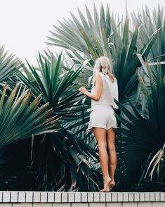 Palms + Light Layers