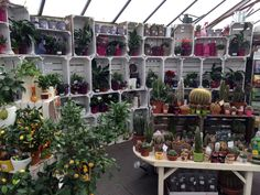 Ferndale Garden Centre place houseplants at the entrance and use painted fruit crates to showcase them very effectively… Garden Stand, Garden Shop, Garden Nursery, Plant Nursery, Garden Planters, Succulents Garden, Center Blog, Fruit Tree Nursery, Garden Center Displays