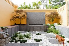 The simple and serene elegance of a Japanese garden is a perfect match for a sustainable garden – and a great way to minimise watering. A small selection of plantings combined with white pebbles and pavers, as in this garden, can turn your courtyard into an internationally-inspired talking point