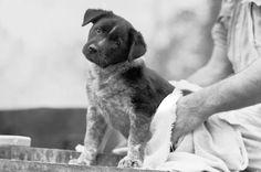 Já que não pode dar banho com muita frequência no seu cachorro, deixe-o bem cheiroso com esse perfume :) #cães #cachorros #dogs #animais #perfume