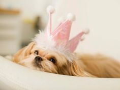 Spoiled Dog: Fact or Fiction?