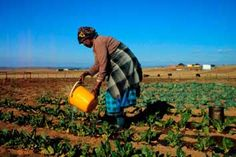 agriculture south africa 2014 - Google Search