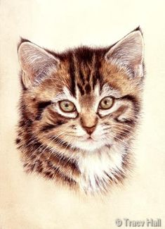 kitten pet portrait in watercolour by Tracy Hall