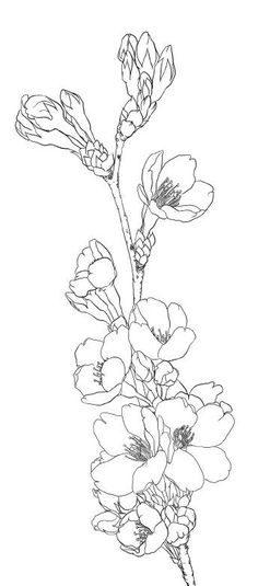 Coloring pages for teens flower outline, flower art, animal outline, line art flowers Illustration Blume, Botanical Illustration, Doodle Coloring, Colouring Pages, Embroidery Flowers Pattern, Flower Patterns, Embroidery Ideas, Flower Sketches, Drawing Flowers