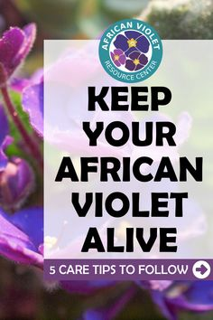 Learn more about how easy it can be to keep your African Violet plants healthy and thriving all year long. Learn the 5 simple care tips to follow as you grow your indoor African Violet houseplants. Fiddle Leaf Fig Tree, African Violet, Plant Care, Houseplants, How To Find Out, Indoor, Learning, Simple, Healthy