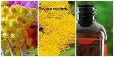 Λάδι ελίχρυσος. Ισχυρό αναπλαστικό αντιρυτιδικό. Μυστικά oμορφιάς, υγείας, ευεξίας, ισορροπίας, αρμονίας, Βότανα, μυστικά βότανα, www.mystikavotana.gr, Αιθέρια Έλαια, Λάδια ομορφιάς, σέρουμ σαλιγκαριού, λάδι στρουθοκαμήλου, ελιξίριο σαλιγκαριού, πως θα φτιάξεις τις μεγαλύτερες βλεφαρίδες, συνταγές [] - €5.00 : www.mystikaomorfias.gr, GoWebShop Platform Beauty Secrets, Beauty Hacks, Sugar And Spice, Homemade Beauty, Herbal Medicine, Face And Body, Herbalism, Hair Beauty, Healing