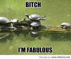 Bitch, Im fabulous