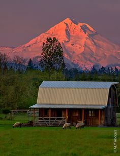 """""""The Clackamas River Valley near Portland, Oregon nestles beneath the iconic peak of Mount Hood. :)"""" It is one of so many beautiful places in Oregon! Country Barns, Country Life, Country Living, Bergen, Into The West, Country Scenes, Old Buildings, Timber Buildings, Red Barns"""