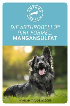 Für die Förderung des Bindegewebes und einer besseren Knochendichte des Hundes ist der Wirkstoff Mangansulfat in den Arthrobello®-Gelenkkapseln verantwortlich. Dogs, Animals, Art, Pet Dogs, Art Background, Animales, Animaux, Kunst, Doggies