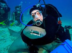 Creature Feature: swim with (not put a choke hold on) nurse sharks in Key Largo with Captain Slate's Atlantis Dive Center