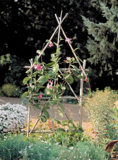 A simple trellis from prunings or stakes