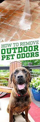 Need help cleaning outdoor odors? Check out this tip from Simple Green.