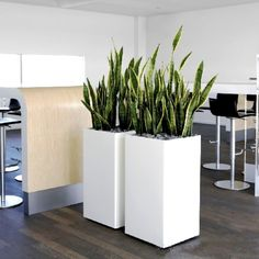 Galleries | Plants for offices, hotels and restaurants