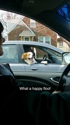 The happiest doggo! #cute #dogs #dog #aww #puppy #adorable