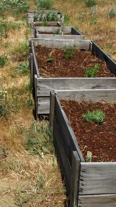 Using old farm shipping crates for garden boxes