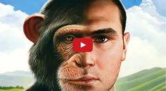 Human (Homo Sapiens Versus Neanderthals) evolution is the evolutionary process…