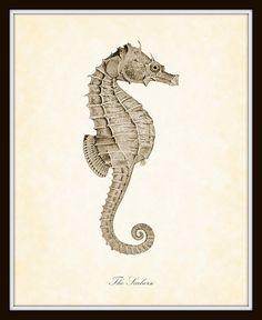 Vintage Seahorse Natural History Art Print 8 x 10 Beach Decor Nautical Coastal Living Decor