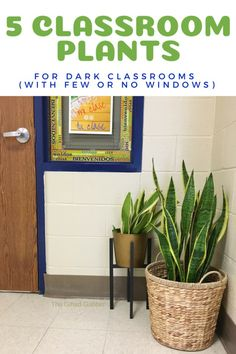 Plants for a Dark Classroom or Office – The Gifted Gabber Need some plants for a dark classroom? No classroom set up (office set up, house set up, you get the point) is complete without some indoor plants! We\'ve got the best five houseplants (that don\'t Middle School Classroom, New Classroom, Classroom Setting, Classroom Setup, Classroom Design, Classroom Organization, Space Classroom, Kindergarten Classroom, Modern Classroom
