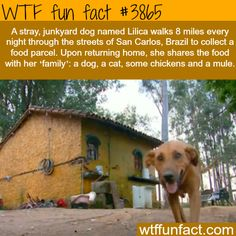 Dog walks 8 miles to get food for his family of other animals - That's Unconditional Love!  -WTF fun facts