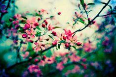 Magnifique parc printemps toile photo #54 Superbe paysage nature toile