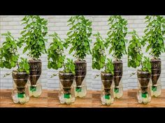 Vertical Vegetable Gardens, Garden Plants Vegetable, Succulent Gardening, Hydroponic Gardening, Container Gardening, Garden Crafts, Garden Projects, Growing Vegetables In Containers, Plants In Bottles
