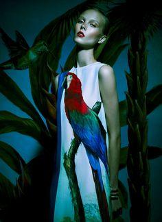 Bird of Paradise: Photo
