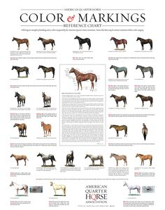 AQHA: Quarter Horse Markings and Color Genetics
