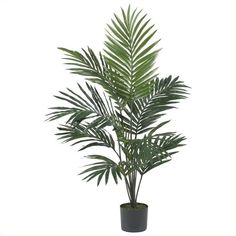 Nearly Natural 5' Kentia Palm Silk Tree (125 CAD) ❤ liked on Polyvore featuring home, home decor, floral decor, plants, fillers, flowers, fake trees, silk tree, silk palm trees and silk flower arrangement