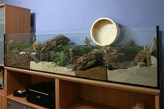 [Аквариум] 167x50x40 аквариум с натуральным средством для Theo - корпус Презентация - www.das-hamsterforum.de