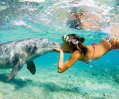 swim with Dolphins :)
