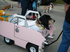 I so need to take Elmo to one of these Basset Waddles!