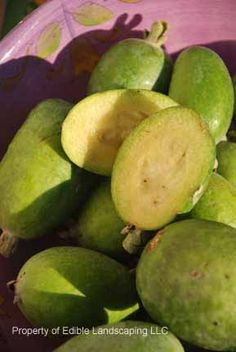 Feijoa fruit in bowl.....we are growing this in our backyard...it's the newest plant that we planted.