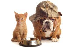 Revista Meu Pet - A revista que todo mês traz matérias incríveis para deixar seu bichinho saudável e feliz.<!--Receita de bolinhos de carne para cães e gatos Home ALIMENTAÇÃO -->