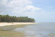 Palmetto Bay, Roatan, Honduras. Photo taken by Tony Rosado