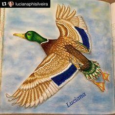 Maravilhoso pato da Luciana. #Repost @lucianaphisilveira ・・・ Pato Selvagem. Livro Wild Savannah by Millie Marotta
