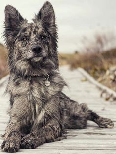Dog Breeds Little Abedul - Animals - - Abedul animals - Breeds Little Abedul - Animals - - Abedul animals - Super Cute Puppies, Cute Baby Dogs, Cute Dogs And Puppies, Doggies, Pretty Animals, Cute Little Animals, Cute Funny Animals, Baby Animals Pictures, Cute Animal Pictures