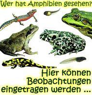Amphibien - Ein Leben zwischen Land und Wasser | Reptilien Projekt ...