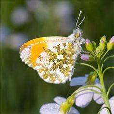Vlinders | Vivara Natuurbeschermingsproducten