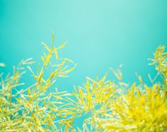 Spring nature home décor, Yellow leaves wall art, Bamboo, Spring, Fine art photography, 8x10 Photograph