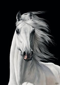 White horse. #Arabians #Art