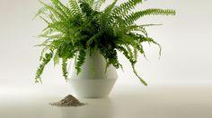 Foto: thomaskirschner.com Plants, Pictures, Urn, Ash, New Life, Stones, Ideas, Plant, Planting