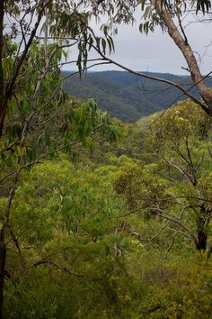 Wollemi National Park - rugged bushland Truth And Lies, Blue Mountain, Wilderness, National Parks, Australia, River, Mountains, Outdoor, Image